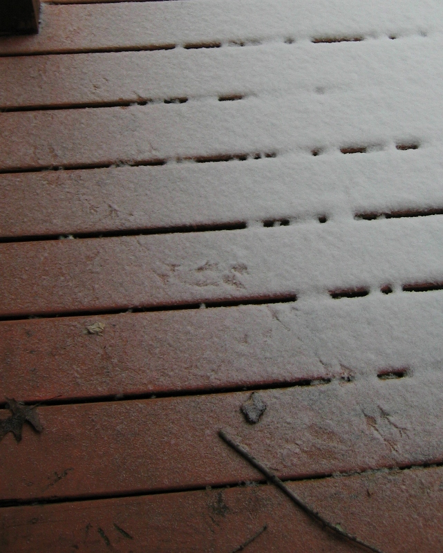 Bird footprints on the porch.